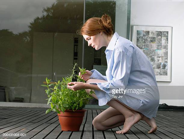 Young woman crouching on decking, examining potted plant, side view