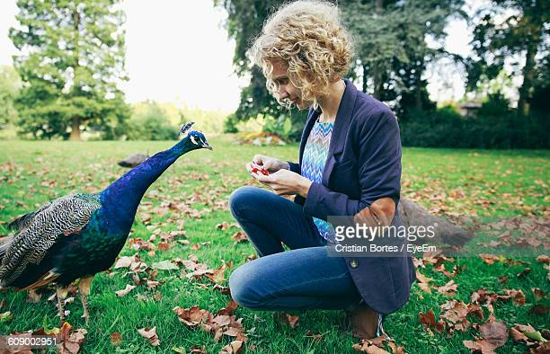 young woman crouching while feeding peacock on grassy field - bortes foto e immagini stock