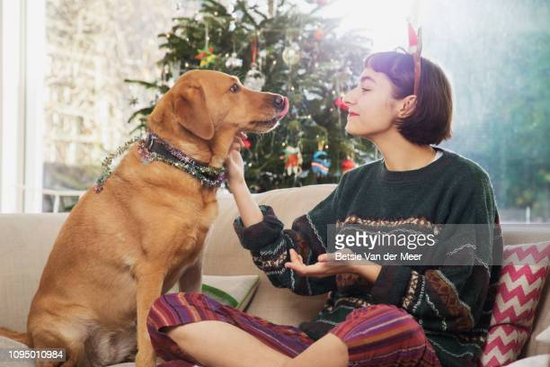 young woman cuddles dog, sitting on sofa in front of the christmas tree. - tradition stock pictures, royalty-free photos & images