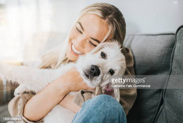 young woman cuddles her 12 week old golden retriever puppy - owner stock pictures, royalty-free photos & images