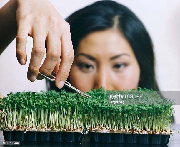Young Woman Cutting Cress with Nail Scissors