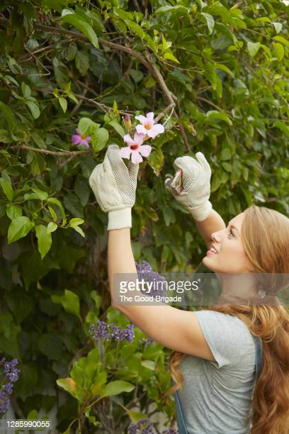 young woman cutting flowers in garden - reaching stock pictures, royalty-free photos & images