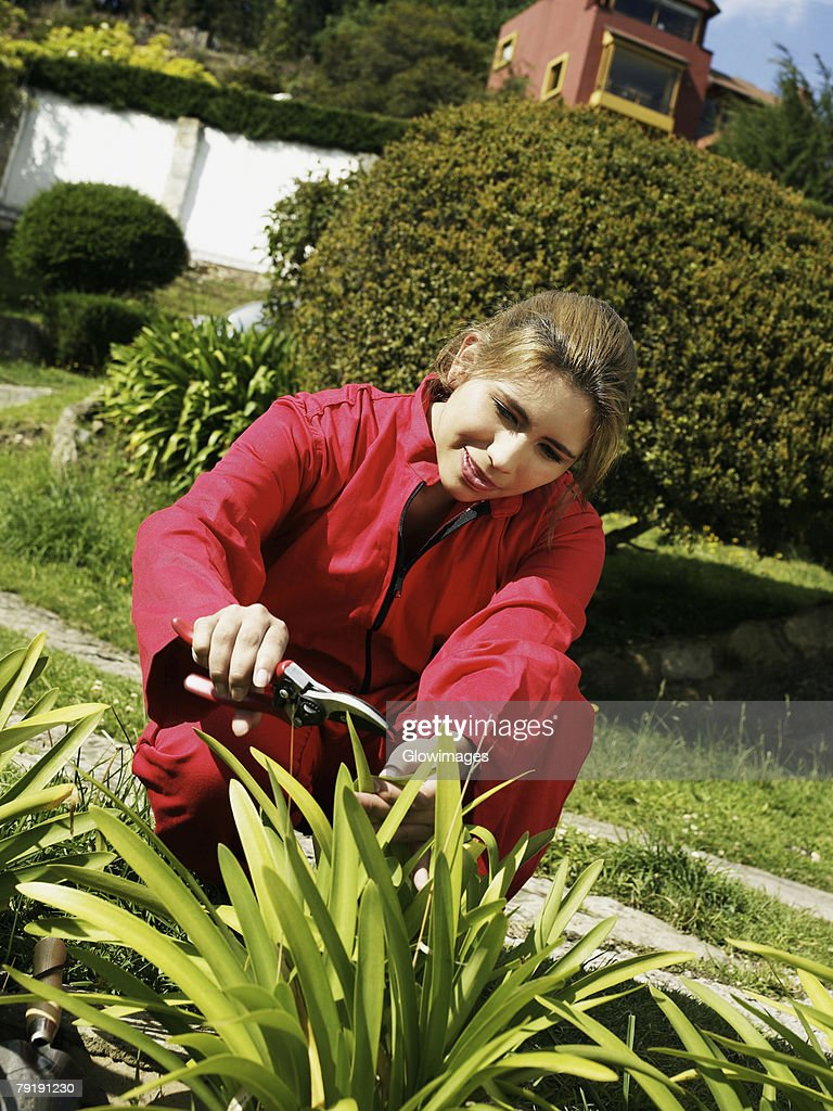 Young woman cutting plants with a secateurs in a garden : Stock Photo