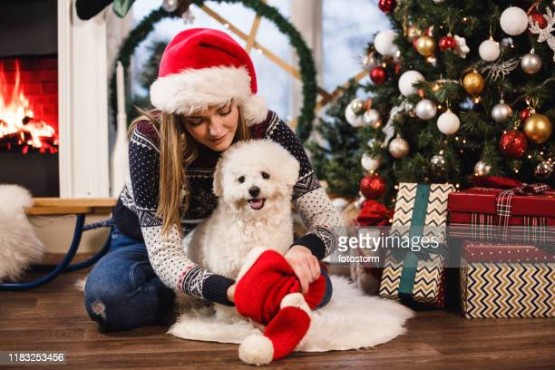 young woman dressing up her dog by the christmas tree - lap dog stock pictures, royalty-free photos & images