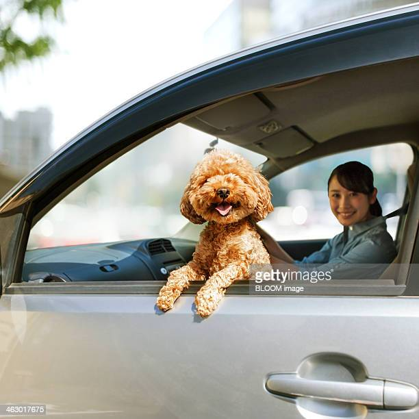 Young Woman Driving Car With A Dog