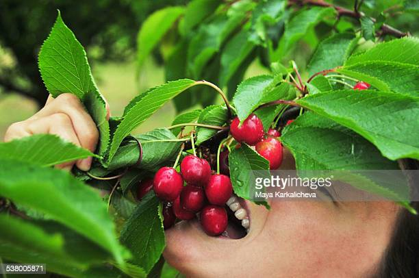Young woman eating cherries from the tree