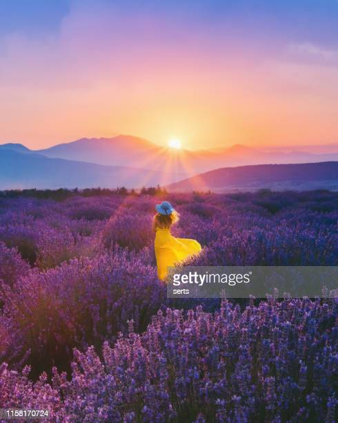 young woman enjoying lavender field at sunset - july stock pictures, royalty-free photos & images