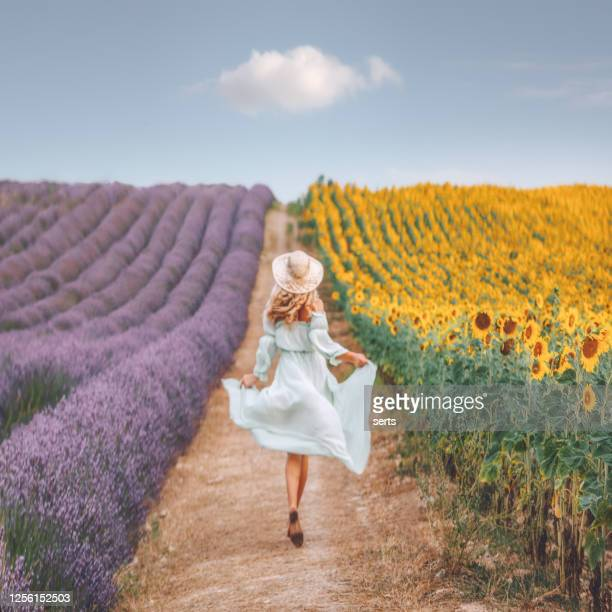 young woman enjoying sunflower and lavender field in provence, france - purple dress stock pictures, royalty-free photos & images