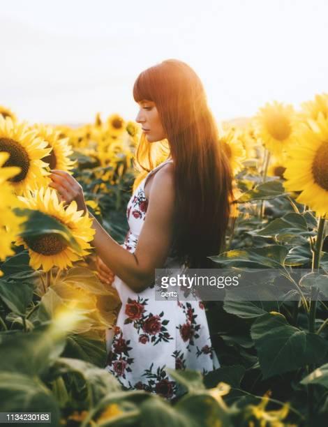 mulher nova que aprecia o por do sol em um campo do girassol - charmoso - fotografias e filmes do acervo