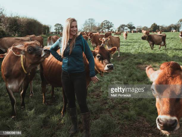 young woman farmer in a field with cows - agriculture stock pictures, royalty-free photos & images