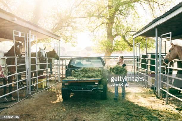 joven mujer alimentación heno en establos de caballos - heno fotografías e imágenes de stock