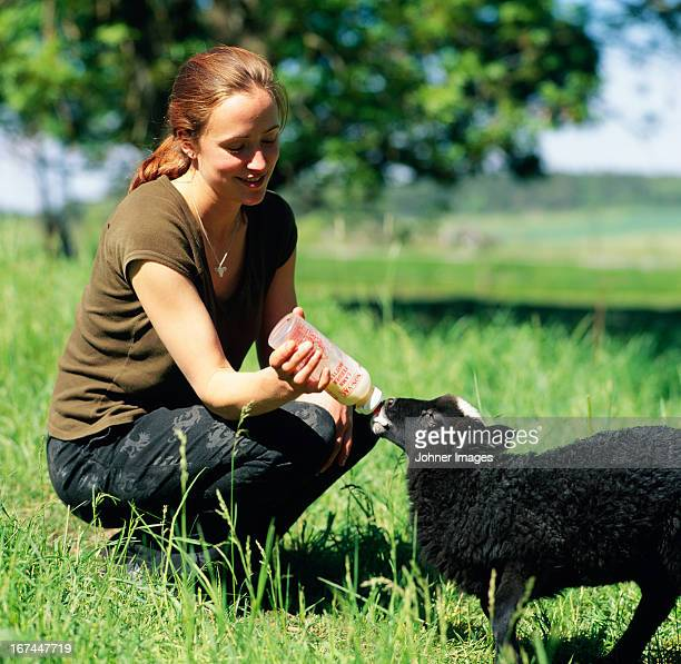 young woman feeding lamb - woman breastfeeding animals stock photos and pictures