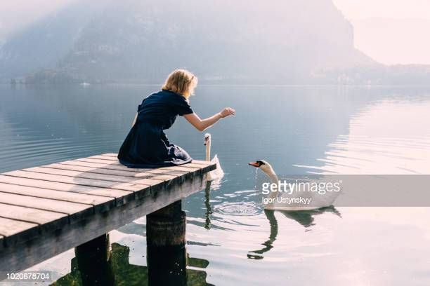 young woman feeding swans - swan stock pictures, royalty-free photos & images