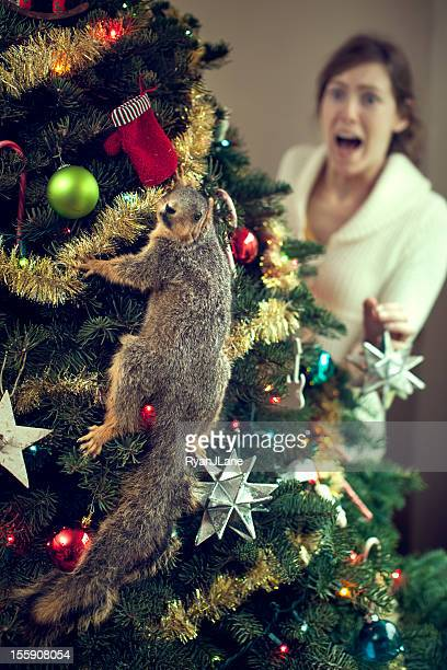 Young Woman Finds Squirrel in Christmas Tree