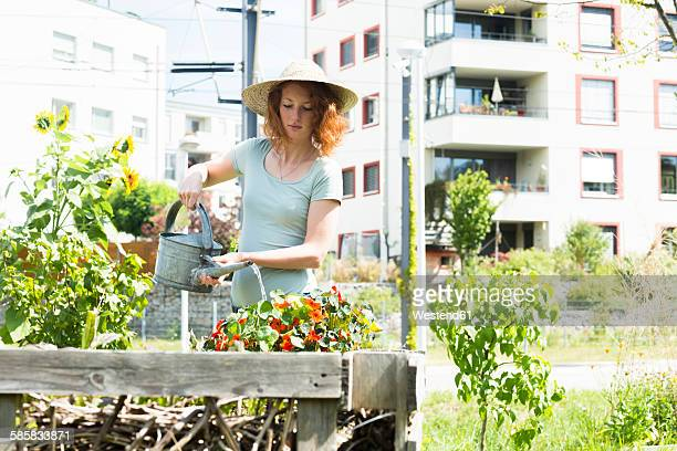 young woman gardening, urban gardening, raised bed, watering - urban garden stock photos and pictures