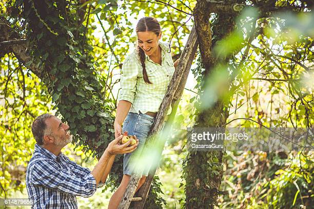 Young Woman Giving Harvested Apples to a Man