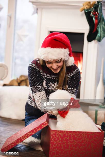 young woman got a puppy for christmas - dog knotted in woman stock pictures, royalty-free photos & images