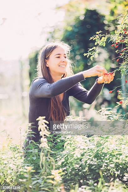 Young Woman Handpicking Rose-hip in her Vegetable Garden