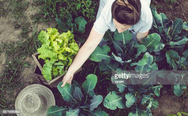 Young Woman Harvesting and Storing Home Garden Vegetables