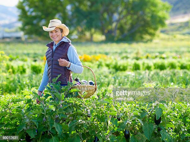 young woman harvesting eggplants at small farm - コロラド州 ニューキャッスル ストックフォトと画像