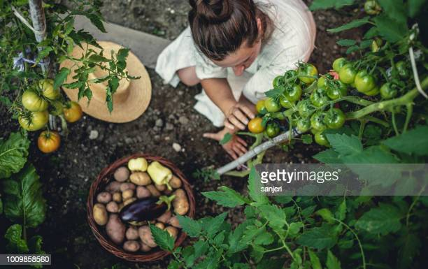 young woman harvesting home grown vegetables - vegetable garden stock pictures, royalty-free photos & images