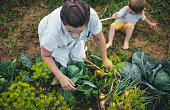 young woman harvesting home grown vegetables