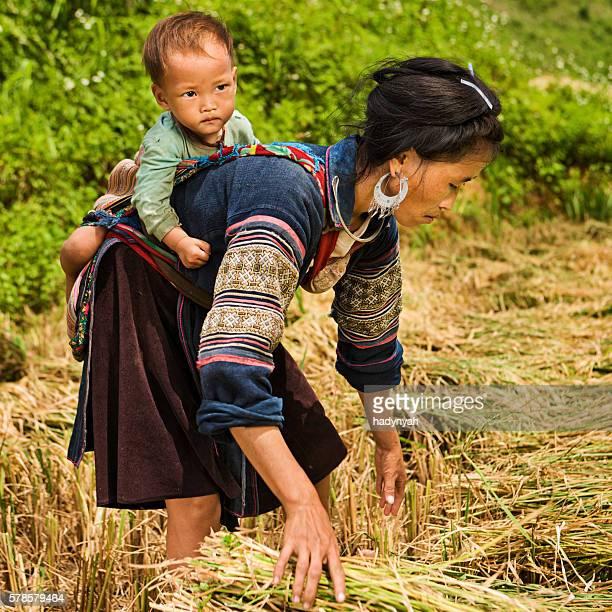 Récolte du riz jeune femme avec bébé sur son dos, Viêt Nam