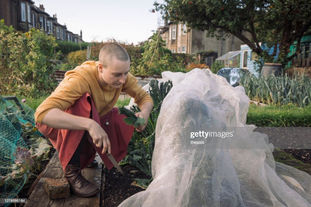 Young woman harvesting vegetables : Stock Photo