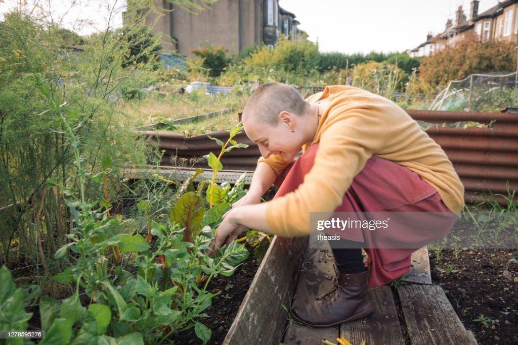 野菜を収穫する若い女性 : ストックフォト