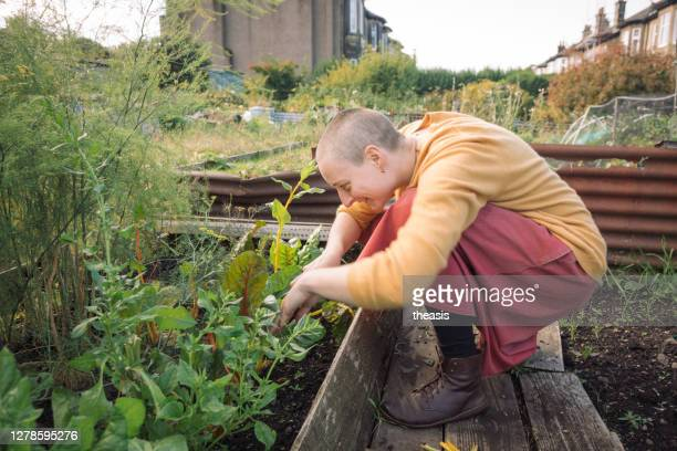 young woman harvesting vegetables - theasis stock pictures, royalty-free photos & images