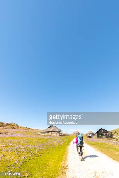 young woman hiking in an old shepherd village at velika planina during crocus flowering, stahovica, upper carniola region, slovenia, europe - eden pastora fotografías e imágenes de stock