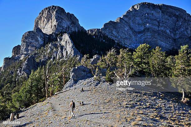 young woman hiking, mount charleston wilderness trail, nevada, usa - mt charleston stock photos and pictures