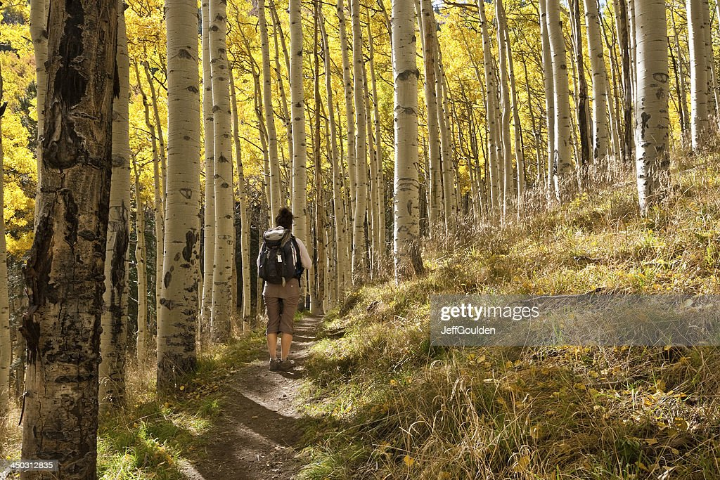 Young Woman Hiking Through Aspen Trees in the Fall : Stock Photo