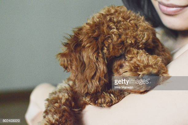 young woman holding a sleeping toy poodle puppy - miniature poodle stock photos and pictures