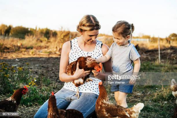young woman holding chicken while daughter pets it on urban farm - agrarbetrieb stock-fotos und bilder