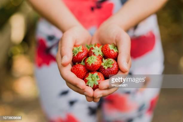 young woman holding handful of strawberries - freshness stock-fotos und bilder