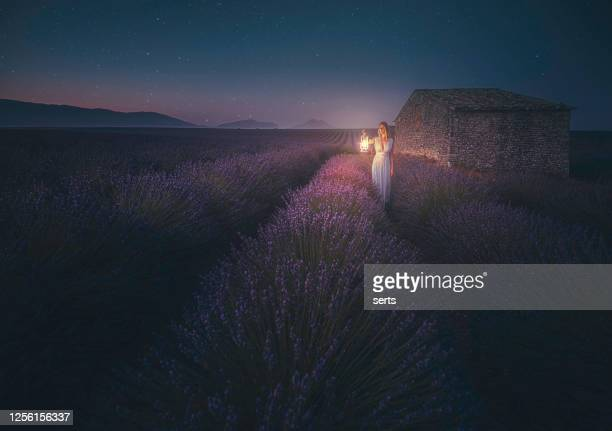 young woman holding lantern in the lavender field during night - purple dress stock pictures, royalty-free photos & images
