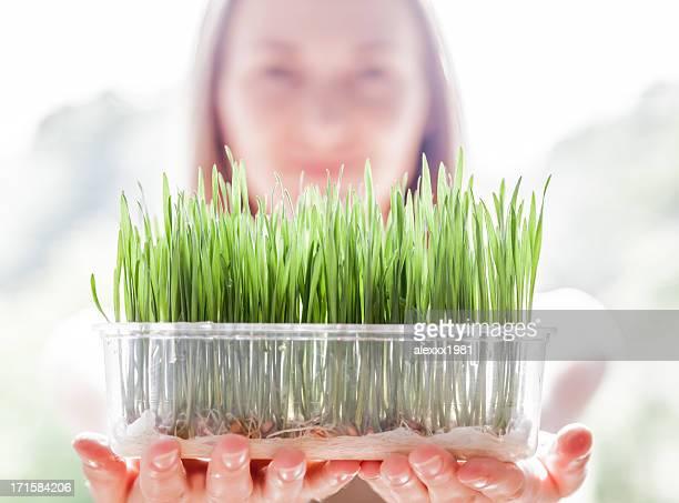 Junge Frau hält Teller mit frischen grünen Kunststoff-Quecke Setzlinge
