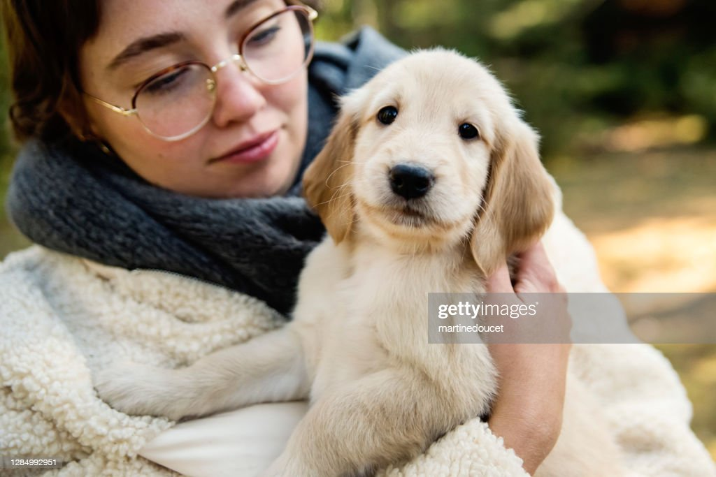 Young woman holding purebred yellow flat-coated retriever puppy. : Stock Photo