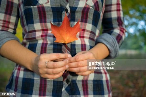 a young woman in a plaid shit holding up a single red maple leaf in her hands - istock stock-fotos und bilder