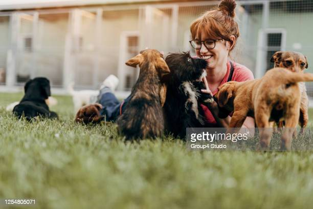 young woman in animal shelter - rescue stock pictures, royalty-free photos & images