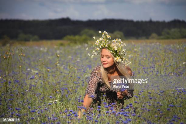 young woman in chamomile (matricaria chamomilla) wreath picking cornflowers (centaurea cyanus) - elena blume stock-fotos und bilder