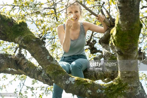 young woman in cherry tree - bo tornvig stock pictures, royalty-free photos & images