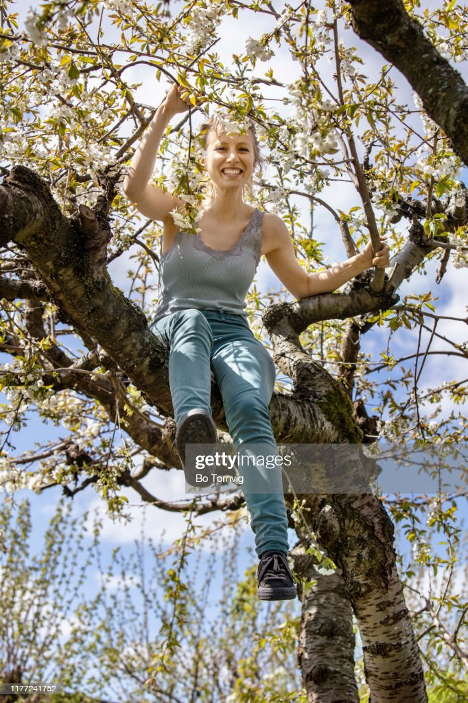 Young woman in cherry tree : Stock Photo
