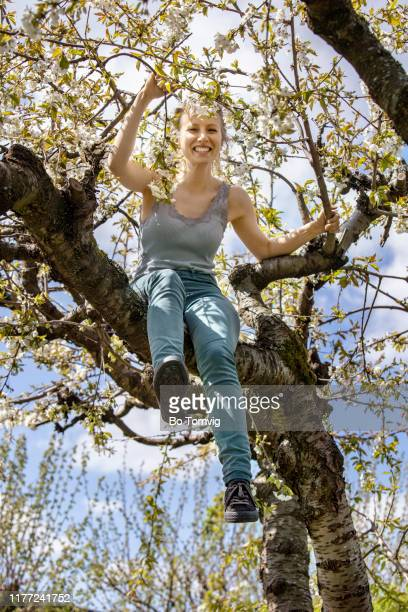 young woman in cherry tree - bo tornvig stock-fotos und bilder