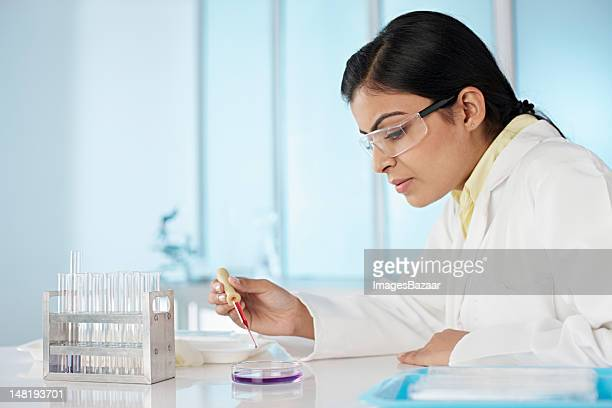 Young woman in laboratory dripping liquid on petri dish