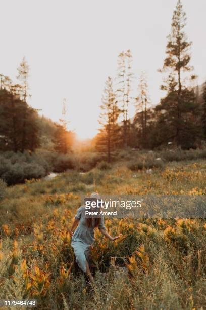 young woman in maxi dress and stetson walking through wildflowers at sunset in rural valley, mineral king, california, usa - sequoia national park stock pictures, royalty-free photos & images