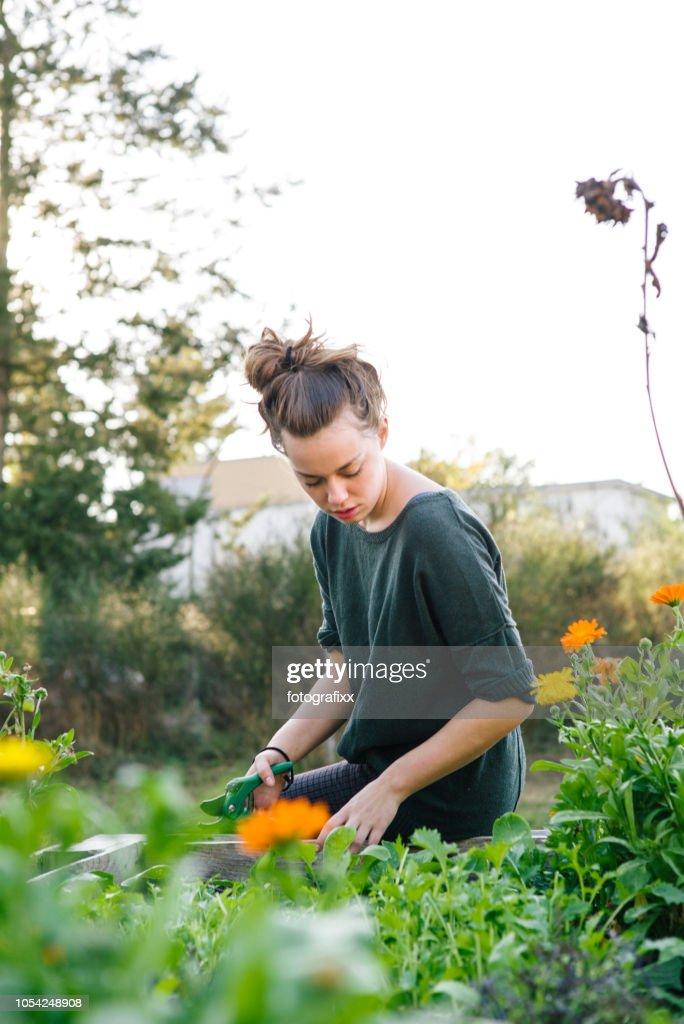 Junge Frau in organische Gartenarbeit Stadtprojekt im Hochbeet : Stock-Foto