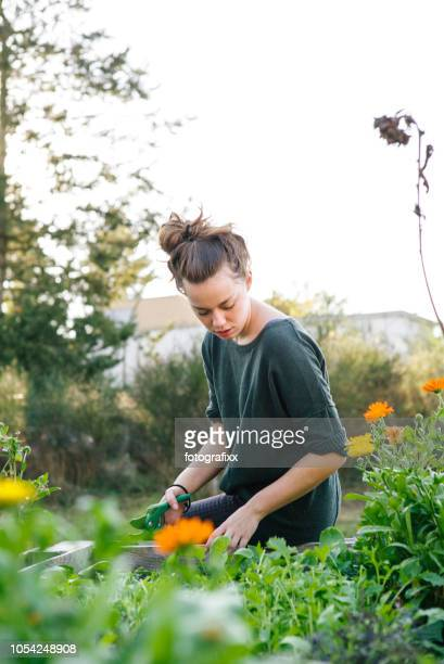 young woman in organic urban gardening project at raised bed - urban garden stock pictures, royalty-free photos & images