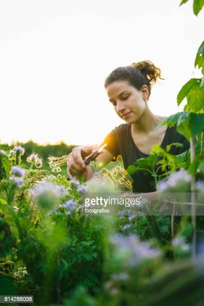 Junge Frau in organische Gartenarbeit Stadtprojekt im Hochbeet